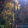 家のそばの木になる実の画像