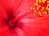あなたという「お花」を咲かせましょう。占星術アロマテラピー☆フラワーエッセンス☆サトルアロマテラピーのカウンセリングとスクール