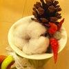 もーすぐクリスマス!の画像