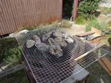 まりこの徒然手帳-牡蠣