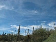 LA香歩ブログ-アリゾナ旅行サワロ