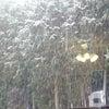 雪がの画像