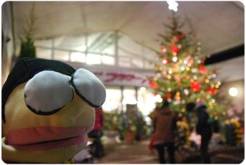 ひばらさんの栃木探訪-ひばらさんの栃木探訪 あしかがフラワーパーク