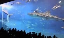 映画を観よう-美ら海