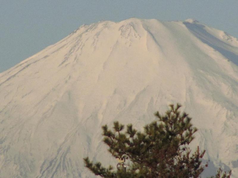 富士山と松
