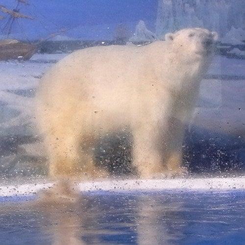 中国大連生活・観光旅行通信**-哈爾濱極地館