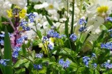 えりーなのブログ お花のティアラ