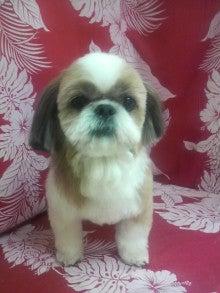 LOOP'S☆十犬十色-2010122716410001.jpg
