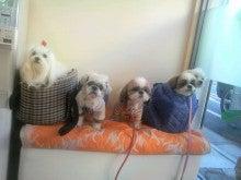 LOOP'S☆十犬十色-2010122714310011.jpg