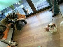 LOOP'S☆十犬十色-2010122714100000.jpg