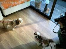 LOOP'S☆十犬十色-2010122713570002.jpg