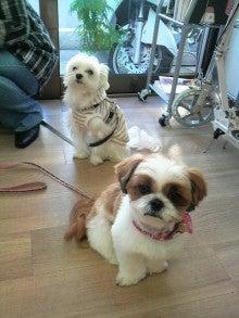 LOOP'S☆十犬十色-2010122714180000.jpg