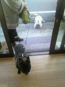 LOOP'S☆十犬十色-2010122910030002.jpg