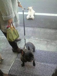 LOOP'S☆十犬十色-2010122910020000.jpg