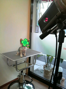 LOOP'S☆十犬十色-2011011309500000.jpg