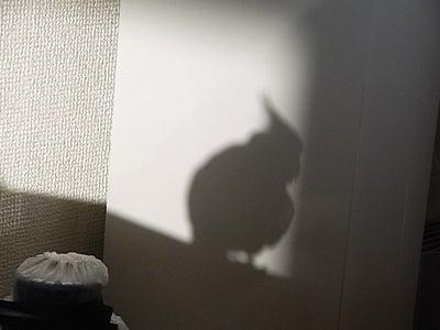 【たんぽぽの惑星】-たんぽぽ011311