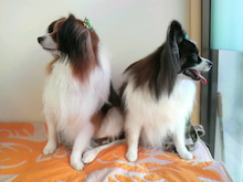 LOOP'S☆十犬十色-2010123115090003.jpg