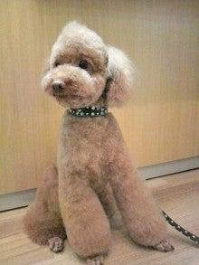 LOOP'S☆十犬十色-2010122918560003.jpg