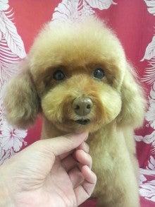 LOOP'S☆十犬十色-2010123013290000.jpg