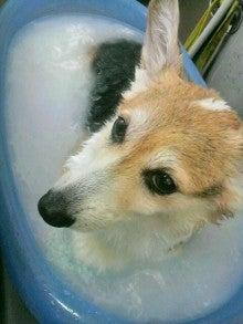 LOOP'S☆十犬十色-2010123110320003.jpg