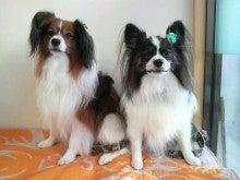 LOOP'S☆十犬十色-2010123115100003.jpg