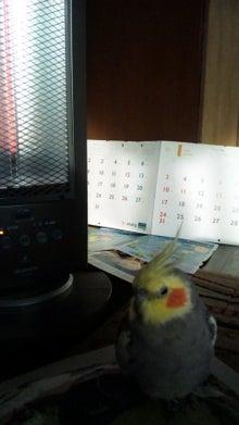 オカメインコのももちゃんと花教室と旅日記-110115_084557.jpg