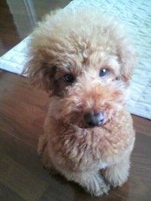 わが家の愛犬 ブラン&アン  ♪はっぴーらいふ♪-2011011608370000.jpg