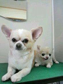LOOP'S☆十犬十色-2011010812450000.jpg