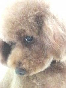 LOOP'S☆十犬十色-2010111216480000.jpg
