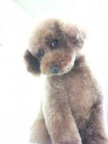 LOOP'S☆十犬十色-2010111216480001.jpg
