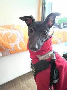 LOOP'S☆十犬十色-2011010813500002.jpg