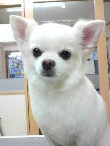 LOOP'S☆十犬十色-2011010716440003.jpg