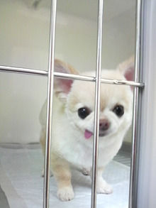 LOOP'S☆十犬十色-2011010811350000.jpg
