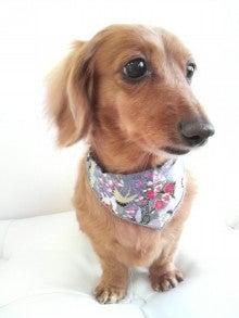 LOOP'S☆十犬十色-2011010815090002.jpg