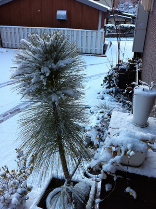 庭とインテリアのデザイン事務所 ジェイプランニングのオフィシャルブログ-大雪 花壇