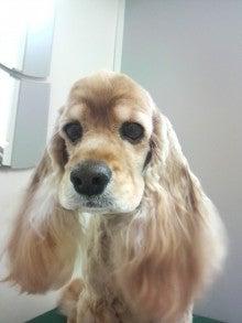 LOOP'S☆十犬十色-2011010919010002.jpg