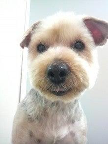 LOOP'S☆十犬十色-2011010916090000.jpg