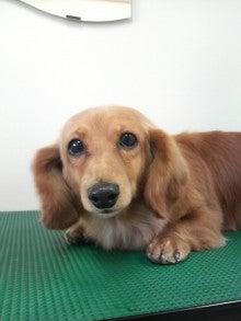 LOOP'S☆十犬十色-2011010912110000.jpg