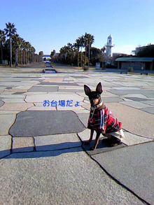 mameちゃん日記-TS3M09630001.jpg