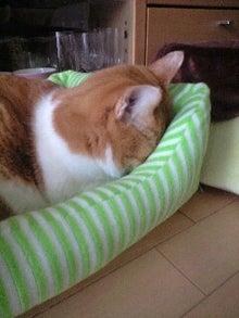 ずれずれブログ…湘南で猫と暮らせば…-110121_1105~0001.jpg