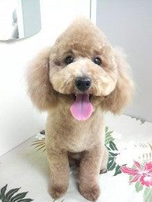 LOOP'S☆十犬十色-2011011319170002.jpg