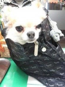 LOOP'S☆十犬十色-2011011417180000.jpg