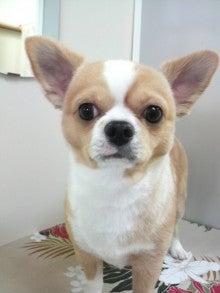 LOOP'S☆十犬十色-2011011315070001.jpg