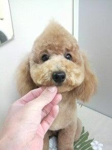 LOOP'S☆十犬十色-2011011319160000.jpg