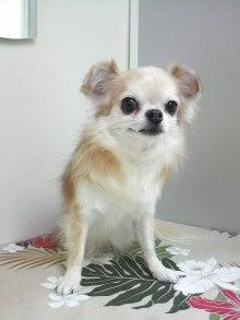 LOOP'S☆十犬十色-2011011417150003.jpg