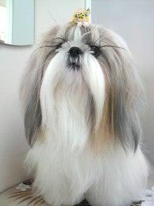 LOOP'S☆十犬十色-2011011414320000.jpg