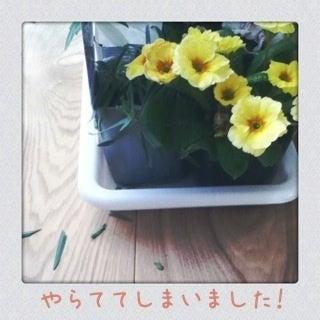 photo:02
