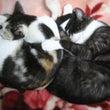 家猫 龍馬とハル