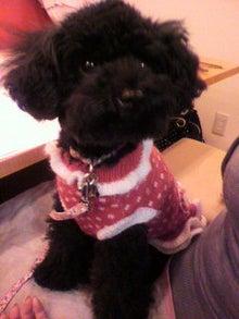 わが家の愛犬 ブラン&アン  ♪はっぴーらいふ♪-2011011419050000.jpg