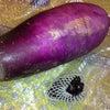 おばあちゃんの畑のお野菜の画像